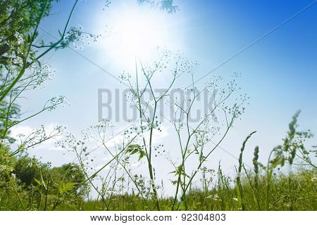 Wild Plant Against The Blue Sky
