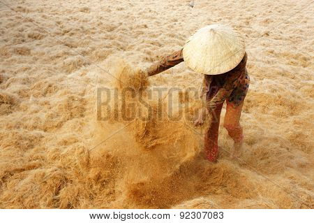Asian Worker, Coconut, Vietnamese, Coir, Mekong Delta