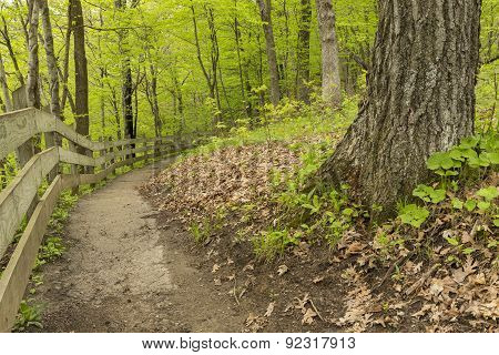 Trail In The Woods During Spring