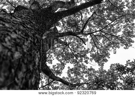 An aerial view of a tall tree on a blue sky background on a grayscale