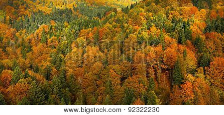 Lush, Colorful Autumn Forest Landscape, Aerial View
