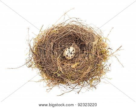 Quail In The Nest