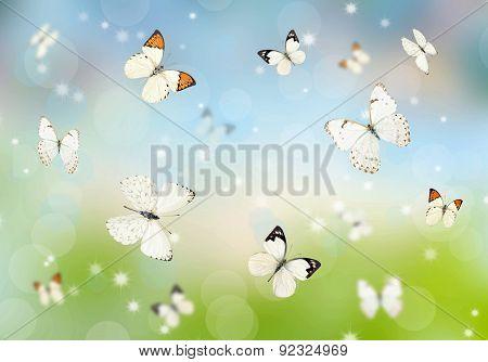 Butterflies 3D