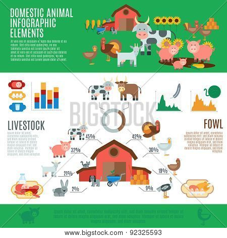 Domestic Animals Infographics