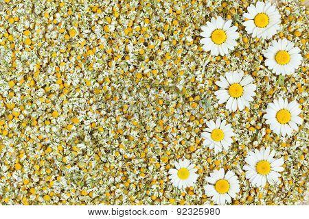 Dried organic natural chamomile blooming flowers texture
