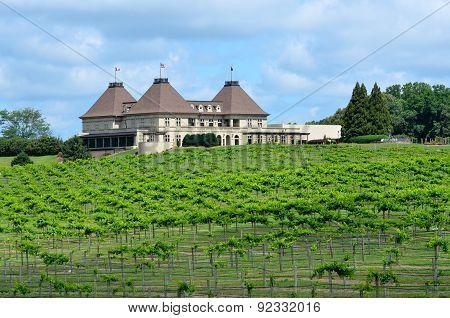 North Georgia Vineyard