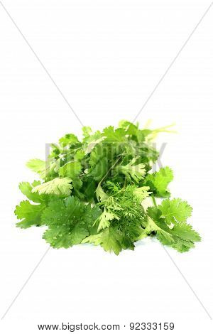 Real Green Coriander