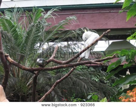 White Parrot In The Garden