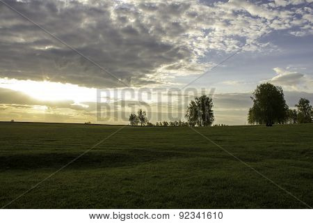 Picturesque Green Fields, With Rare Trees At Dawn