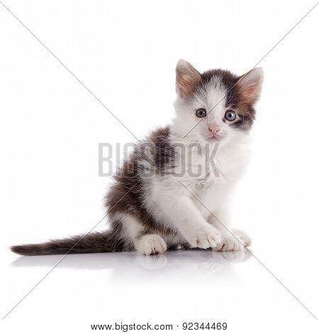 Lovely Spotty Small Kitten.