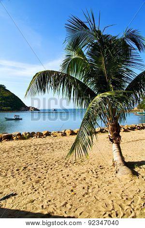 Asia In   Bay The  Koh Phangan  Isle