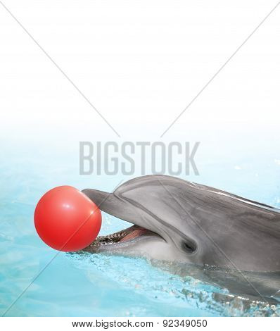 Dolphin With Ball