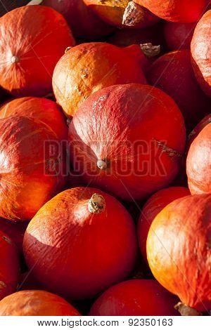 Red Roter Hokkaido Cucurbita Pumpkin Pumpkins From Autumn Harvest