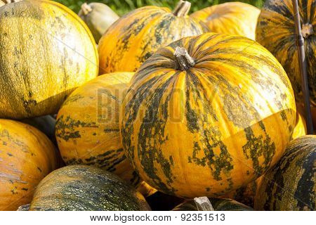 Oil Lady Godiva Cucurbita Pumpkin Pumpkins From Autumn Harvest