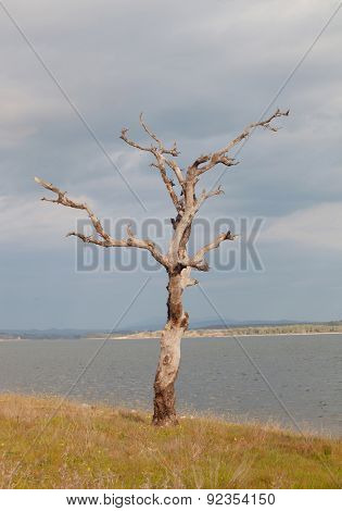 Dry tree at the foot of a lake in Spain