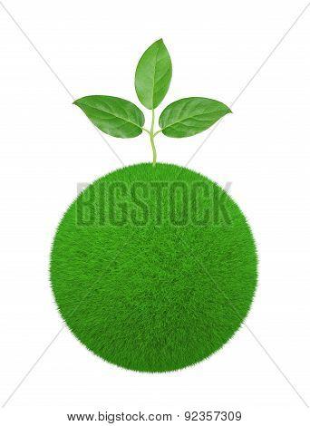 Sapling Grows On Grass Ball