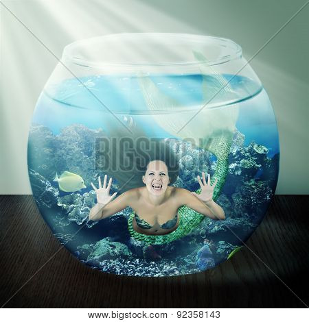 Evil Mermaid In Fishbowl With Fish On Table