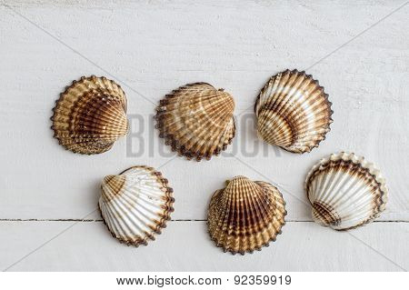 A Collection Of Seashells On A White  Background.