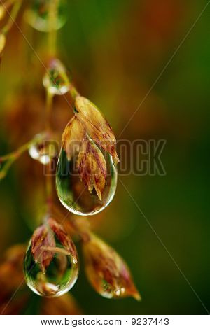 Within The Dew Drops