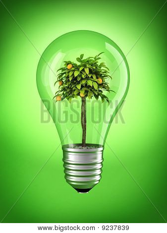 Natural bulb