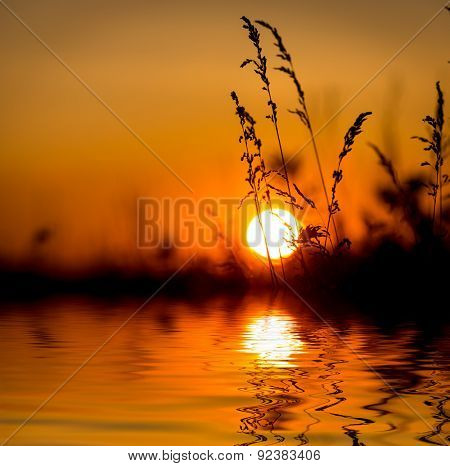 wild grass over big sun sunset background with abstract water reflection