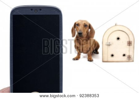Smartphone, dachshund dog and transport cage. Idea for Canine delivery applications, Pet shop messages, veterinarians, Social dog apps, and others