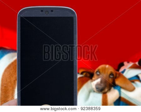 Smatrphone and basset hound on blurred background. Idea for pet shop app, photos of dogs, veterinarian applications, and others.