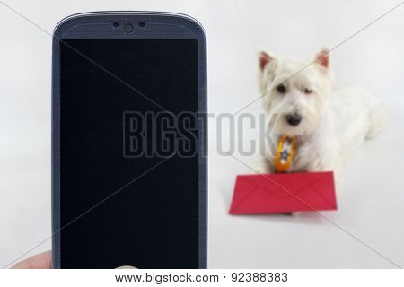 Smatrphone and a Westie dog on blurred background. Idea for pet shop app, photos of dogs, veterinarian applications, email and others.