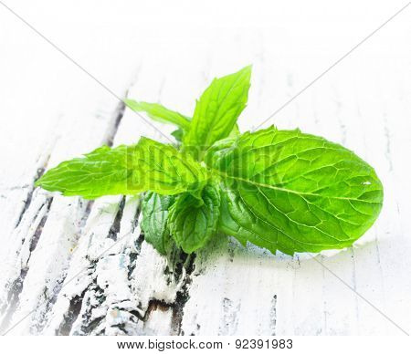fresh mint on the white wooden table