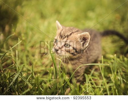 curious little baby cat looking away in the grass