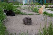 image of homeless  - Three cats left homeless shelter in search of food - JPG