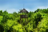 picture of observed  - old wooden observation tower in the forest