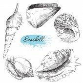 foto of snail-shell  - Beauty set of various sea shells vector - JPG