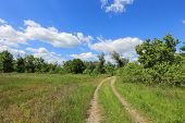 pic of steppes  - rut road in steppe at a nice summer day - JPG