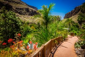 pic of spiky plants  - Path through the tropical plants garden in Palmitos Park in Gran Canaria, Canary Islands, Spain ** Note: Visible grain at 100%, best at smaller sizes - JPG