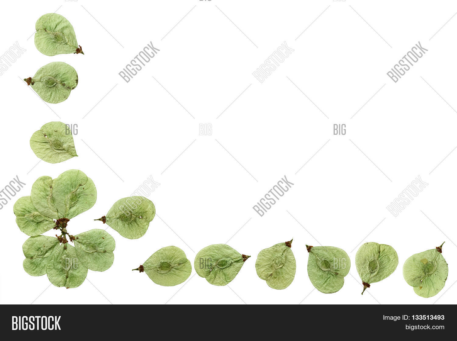 How to scrapbook dried flowers - Pressed And Dried Flowers Elm Border Edging For Decoration Scrapbook Isolated On White Background