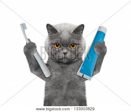 cat is going to clean the teeth -- isolate on white background