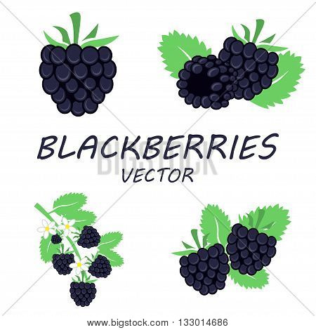 Vector flat blackberries icons set on white background
