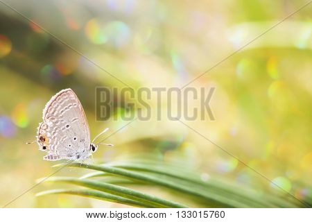 Butterfly in spring time with blur background.