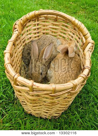 basket with rabbits
