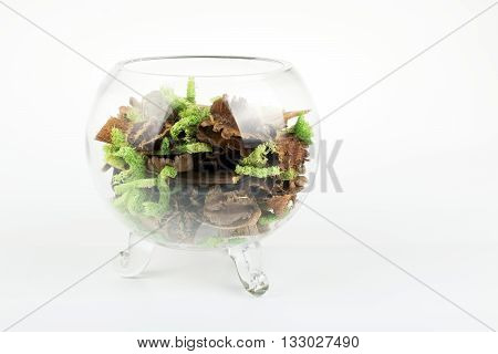 Moss and bark in a glass vase