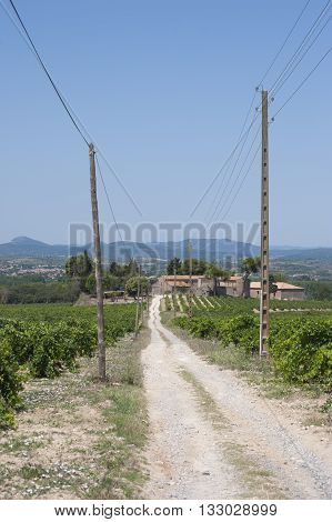 Rural dirt road among grape land. Shooting in the summer of 2014. France in the Languedoc.