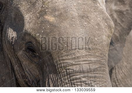 Close-up of elephant head covered in dust