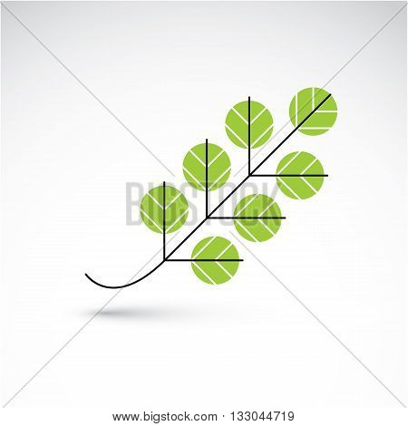 Spring Ash Leaf, Botany And Eco Flat Image. Vector Illustration Of Herb, Natural And Ecology Element