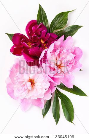 peony flowers