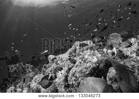Eel Mooray Maldives Corals House For Fishes Underwater View