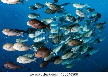 Parrot School Of Fish Portrait In Maldives