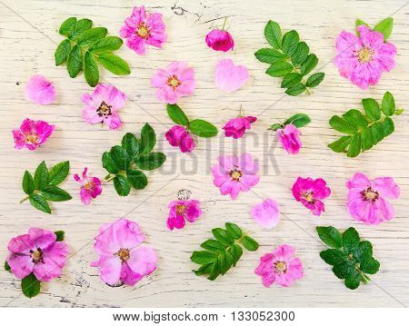 Pink Flowers On Light Wooden Background.