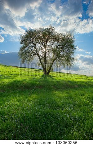 Lonely Tree; Spring; Light Through Trees;