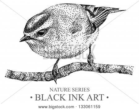 Illustration with bird goldcrest drawn by hand with black ink. Graphic drawing pointillism technique. Element for design